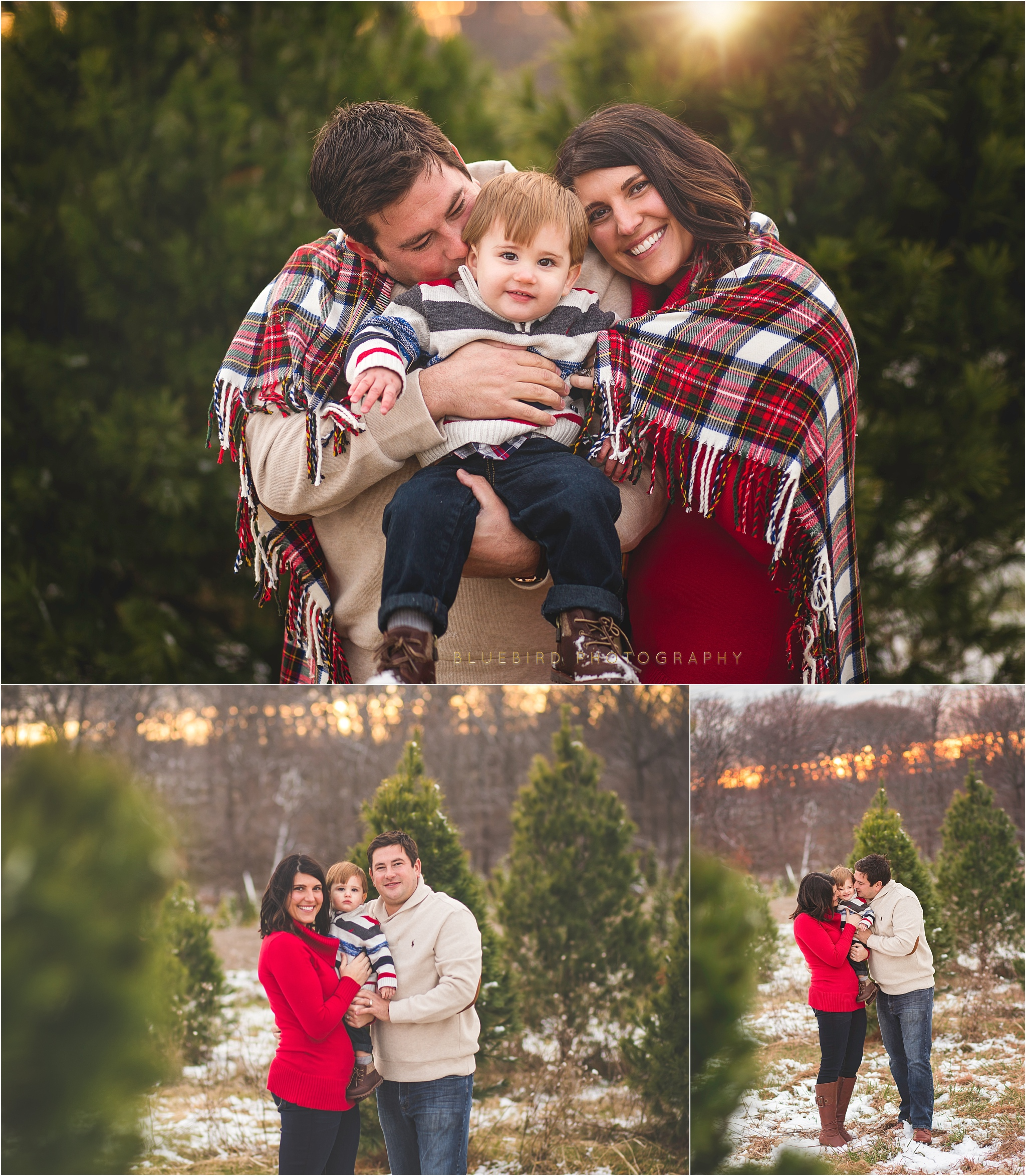Christmas Tree Farm Mini Sessions.2016 Christmas Tree Farm Minis Bluebird Photography